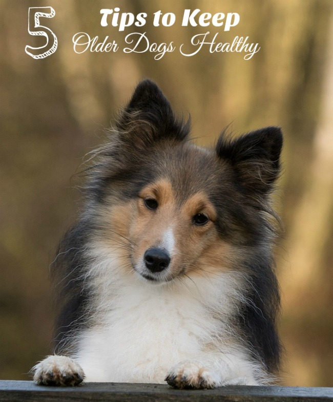 5 Tips for Keeping Your Older Dog Healthy