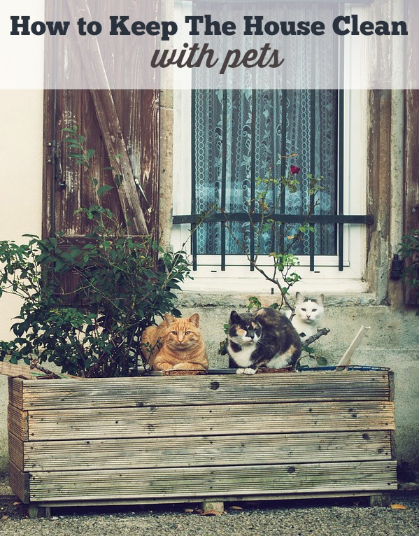 How To Keep My House Clean With Pets Thecarpets Co